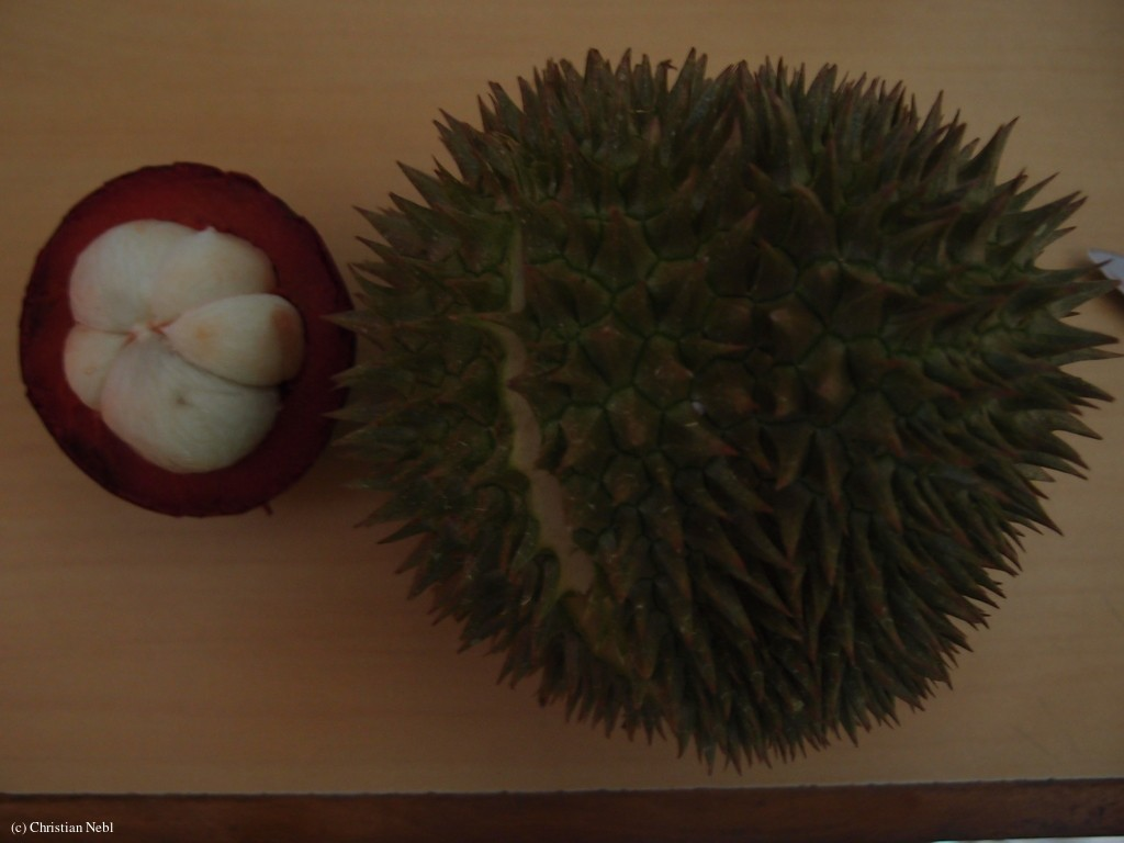 Mangostane & Durian